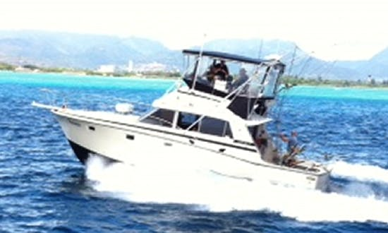 38' Sport Fisherman Fishing Charters in Honolulu, Hawaii