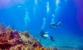 Diving Trips in Little Bay, Montserrat