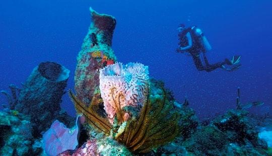 Scuba Diving In Ölüdeniz Belediyesi