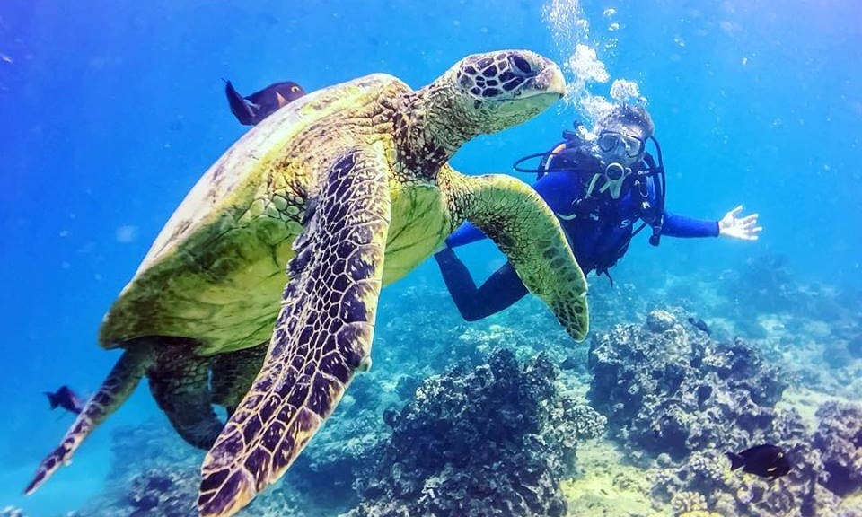 Free Diving with Sharks Tour in Haleiwa, Hawaii