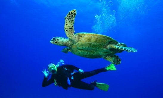 Scuba Diving In North Kona