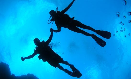 Diver Bees Diving Center In Kusadasi