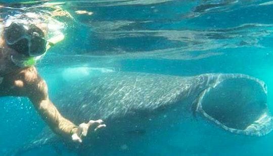 Snorkeling Trip In Cenote