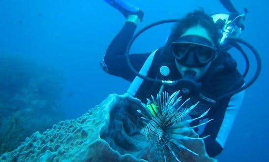 Diving Trips In Santa Marta, Colombia
