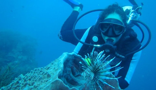 Diving Trips In Santa Marta, Colombia