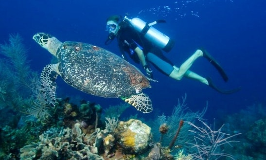 Scuba Diving Lesson And Trips In Taganga, Colombia