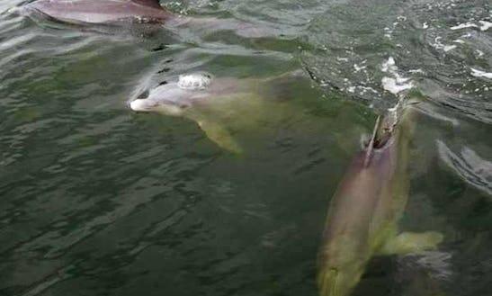 Dolphin Tour In Melbourne, Florida