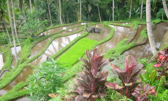 Sightseeing in Ubud