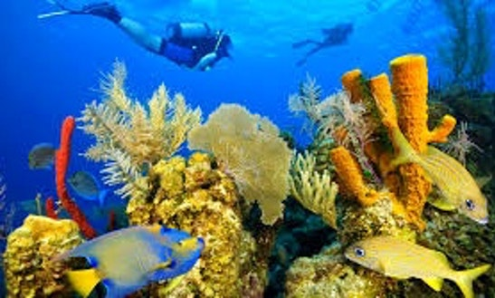 Diving Trips In Tampa, Florida