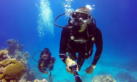 Diving Trip In Dibba Al Fujairah