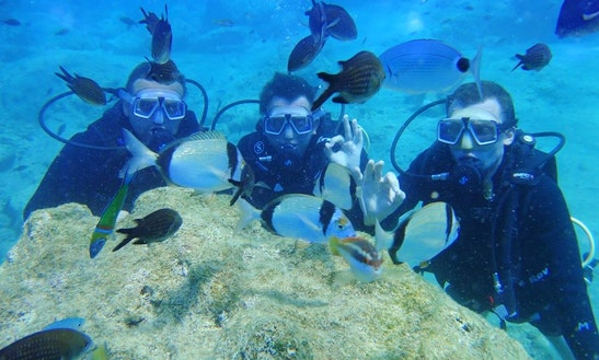 Diving Trips And Courses In Antalya