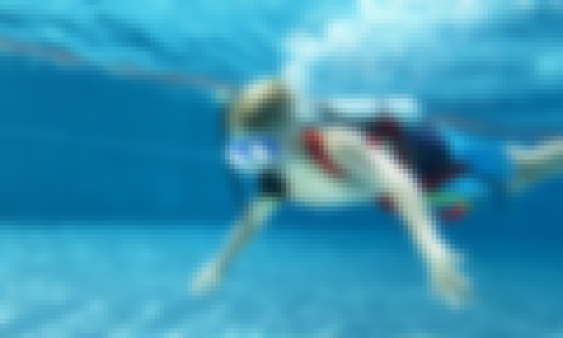 Scuba Diving Trips and Courses in Gemeinde Gosau, Austria