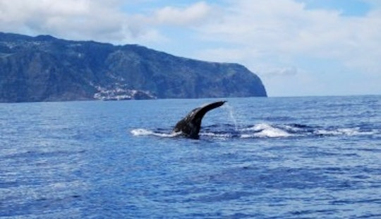Eco Tour, Whale Watching And Snorkeling In Porto Moniz, Madeira