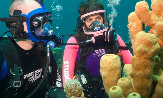 Diving Courses In Dubai