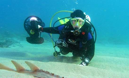 Diving Trips & Courses In Shellharbour
