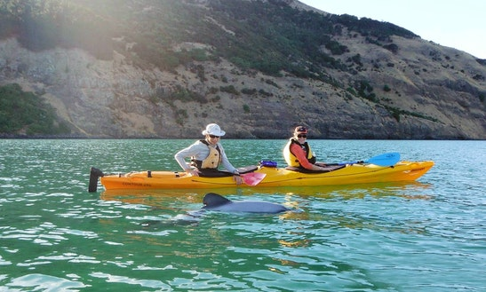 Guided Kayak Safari Tours In Akaroa