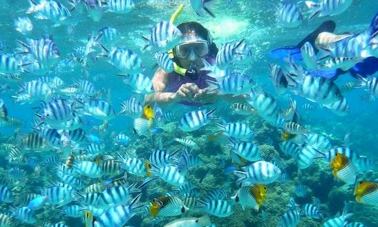 Snorkeling Tour In Coffs Harbour Australia