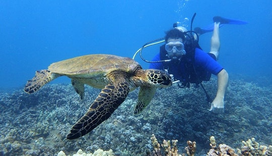 Learn To Scuba Dive In Lahaina