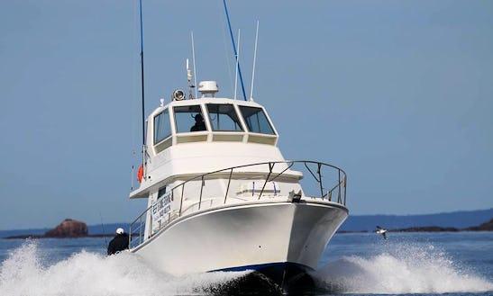 'rathlin 11'  Fishing Charter In Merimbula