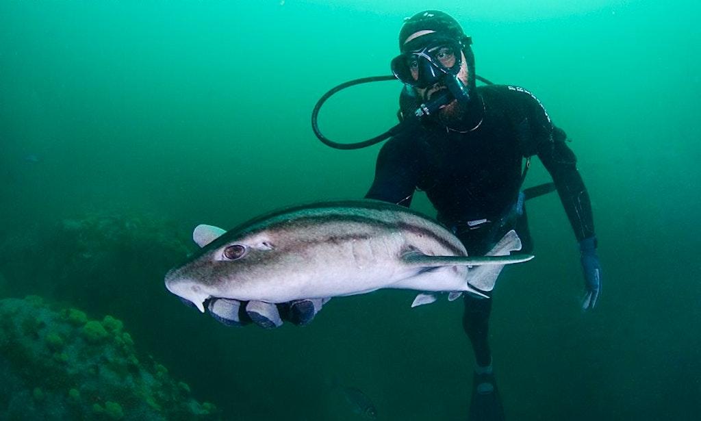 Shark Diving On Tiger Beach Getmyboat