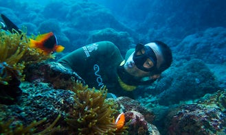 Diving Trips & Lessons in New Taipei City, Taiwan