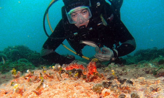 Diving Trips In Rožići