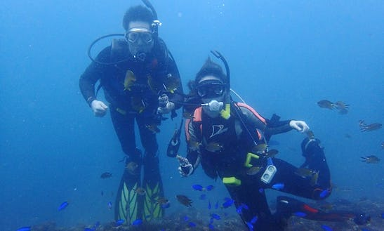 Diving Trips In Nangang District