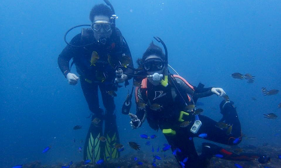 Diving Trips in Nangang District
