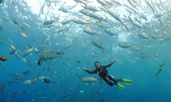 Day Dive Trips To Tulamben Or Amed Area In Indonesia