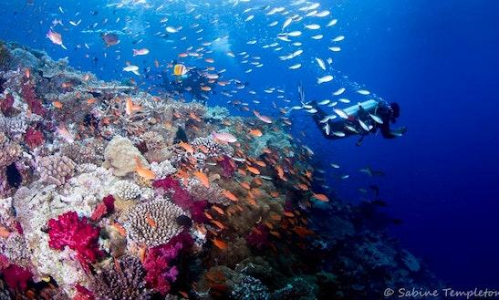 Scuba Diving In Nadi
