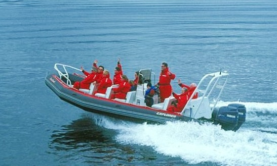 Marine Eco Tours In Comox-strathcona D