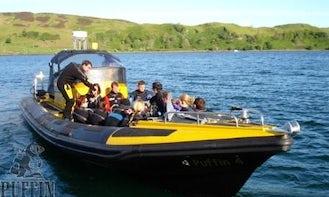 Rib Boat Diving Trips in Scotland