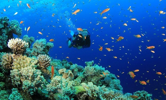 Diving Trips In Tp. Nha Trang