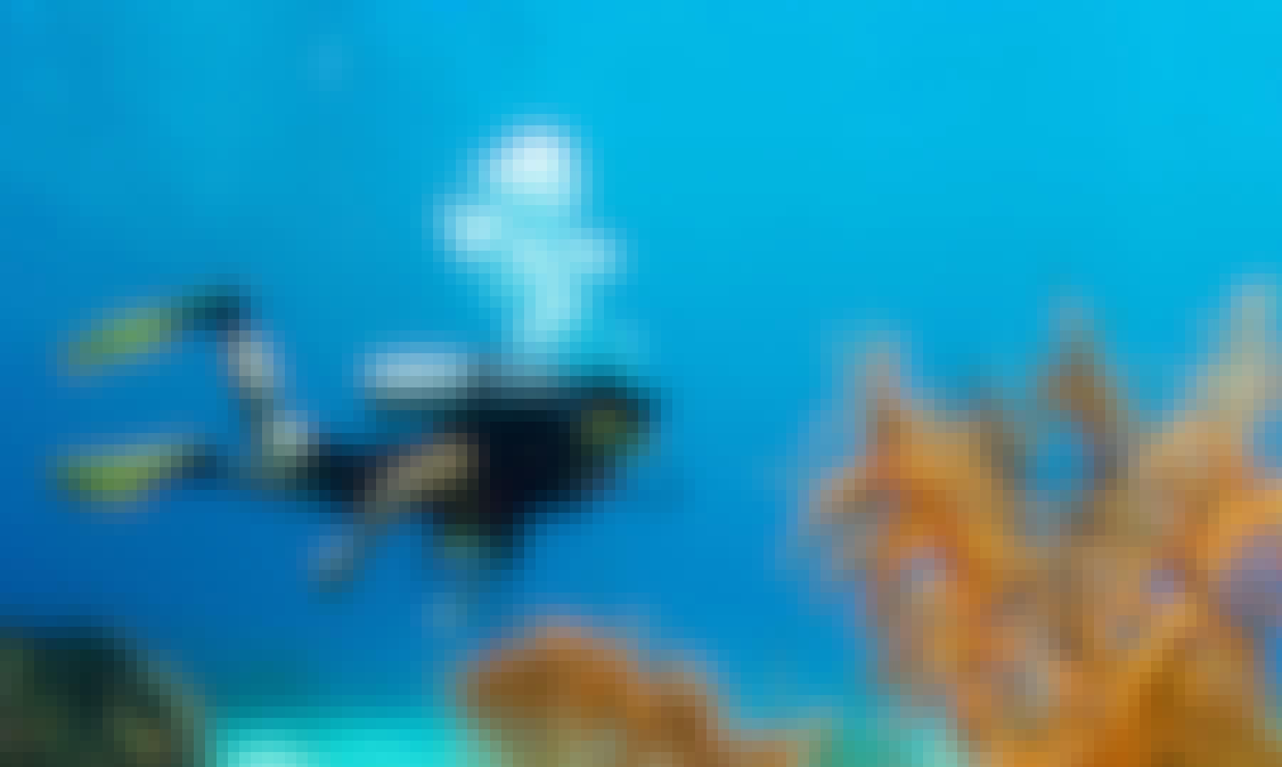 Diving Courses in Negombo, Sri Lanka