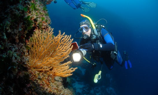 Diving Trips And Courses In Bozava
