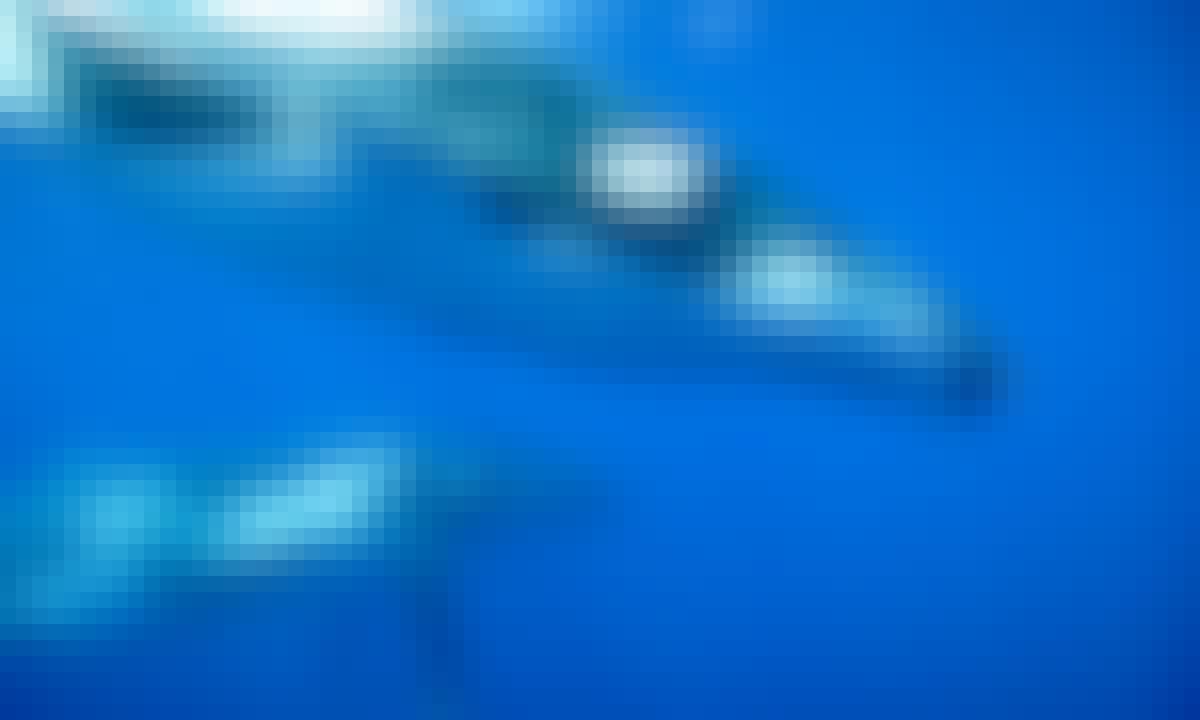 Humpback Whale Swim from Nuku'alofa, Tongatapu, Tonga
