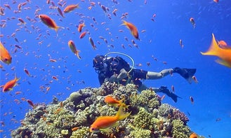 Diving Courses in Budapest