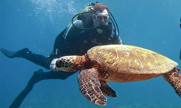 Private Boat Diving Charter Trips in Haleiwa, Hawaii