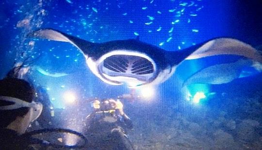 Manta Ray Night Snorkel Charters In North Kona, Hawaii