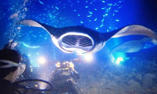 Manta Ray Night Snorkel Charters In North Kona, Hawaii