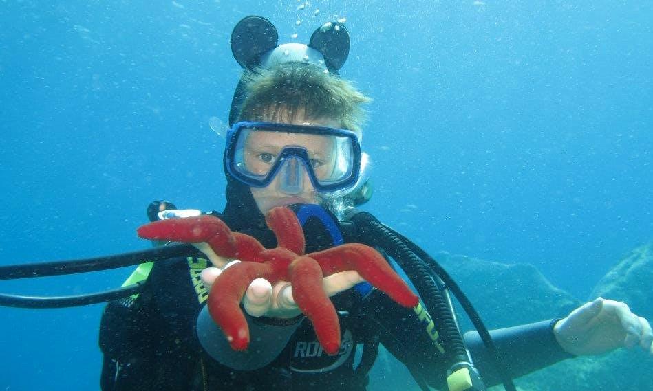 Liveaboard Dive Experience in Tambon Khuekkhak, Thailand