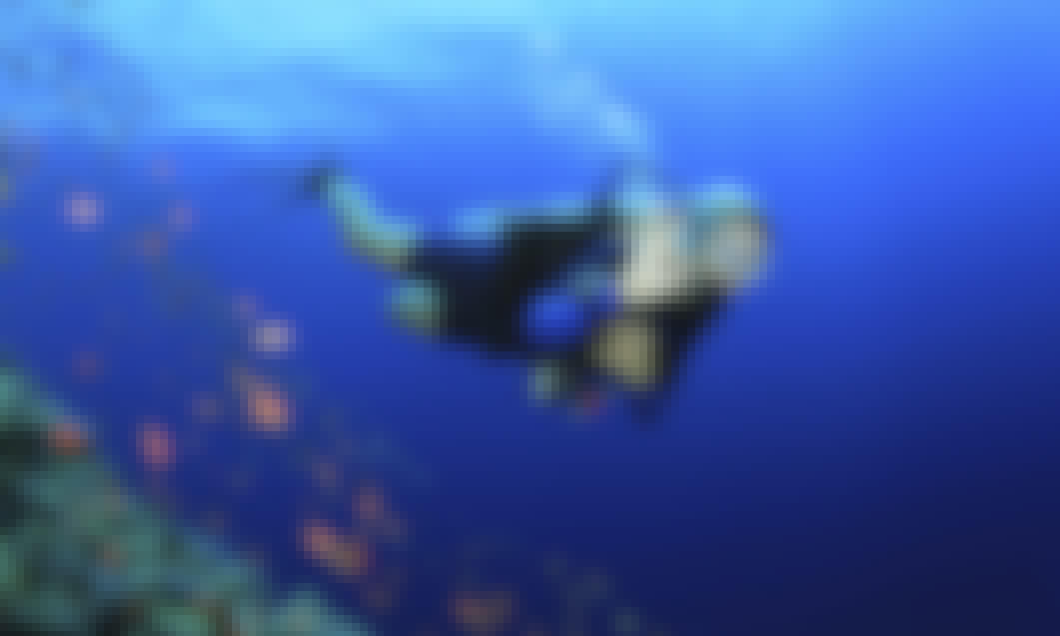 Amazing Diving adventure!