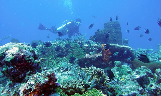 Diving Trips And Courses In Indonesia