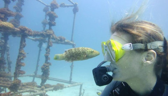Experience The Thrill Of Diving In Pahang, Malaysia