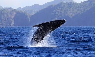 Whale Watching in Ogasawara-mura