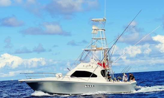 Watchdog Fishing Charters - Gold Coast Luxury Charter Boat