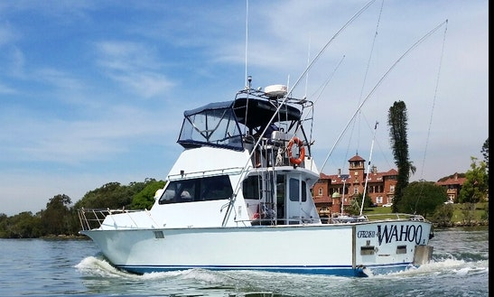 Sydney Sport Fishing Trip On 39ft
