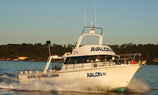 Sydney Game Fishing Trip On 55ft
