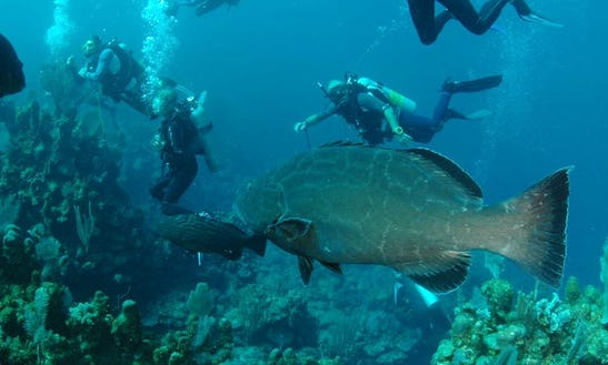 Unforgettable Dive Vacation In Roatan Islands, Honduras