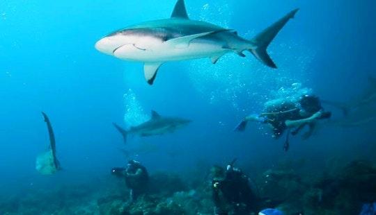 Exclusive Shark Dive Excursions In Islas De La Bahía, Honduras